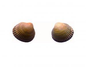 shells treated